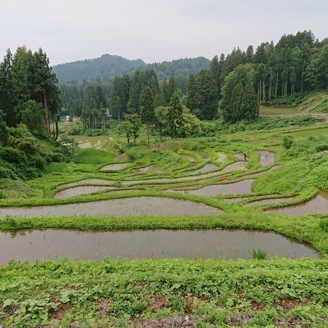 nunagawa_1